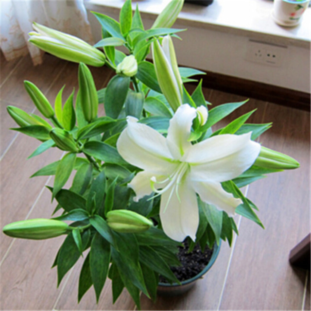 园林植物图片3