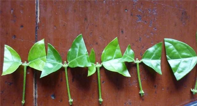 园林植物图片1