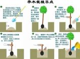 园林绿化养护图片1