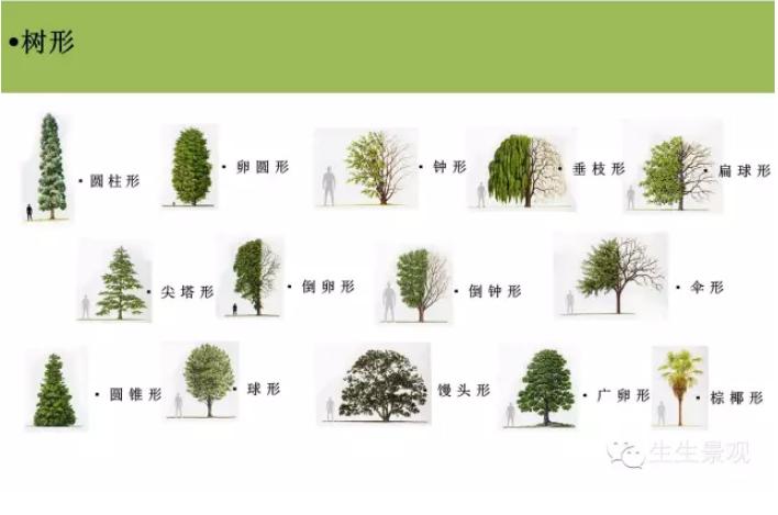 �@林植物�D片3