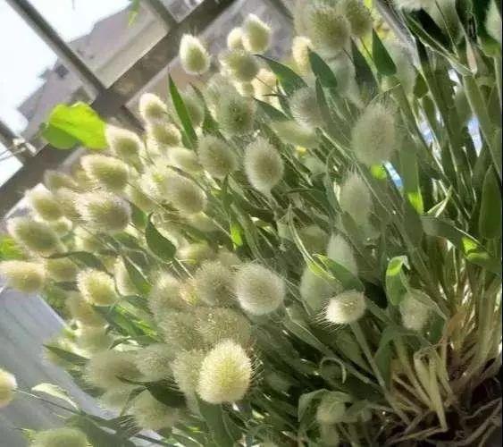 �@林植物�D片2