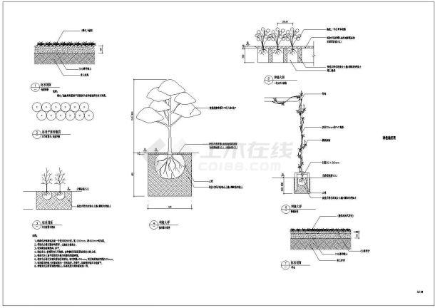 独善公园景观设计图纸--植物-图一