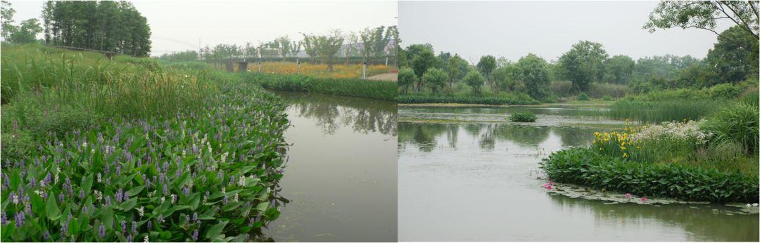 园林景观施工图片2