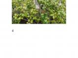 几种常见园林植物图片1