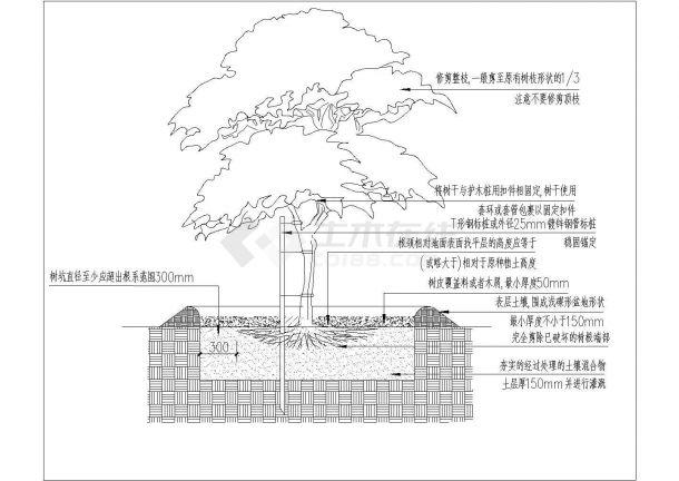 西充县某学校景观植物配置施工图纸-图一