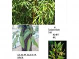 常见园林植物图片1