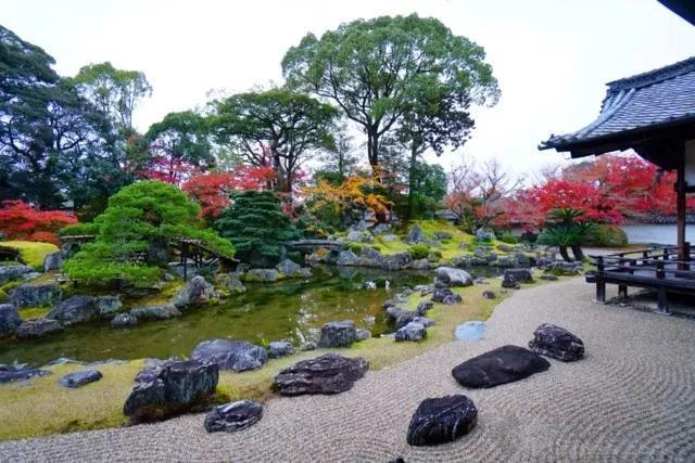 园林植物图片2
