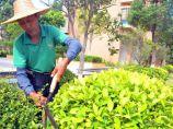 园林绿化养护图片3